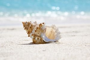 Sea Shell by the beach